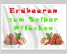Werbefahne für frische Erdbeeren